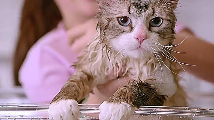 3-Film-Tentang-Kucing-Yang-Menarik-Untuk-Ditonton-5