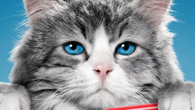 5 Film Tentang Kucing Lucu Dan Imut Terbaik Kitatv Com